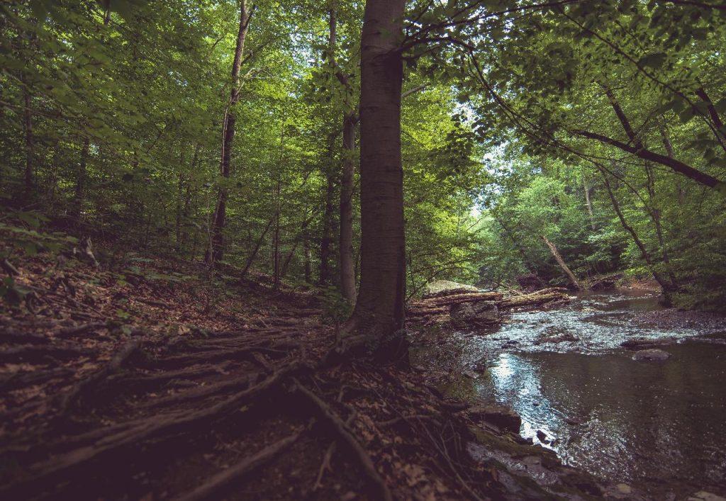 image of roubidoux creek